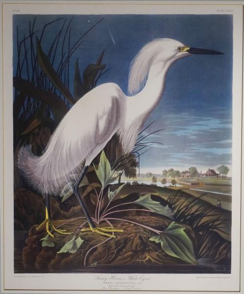 849-AudubonHeron