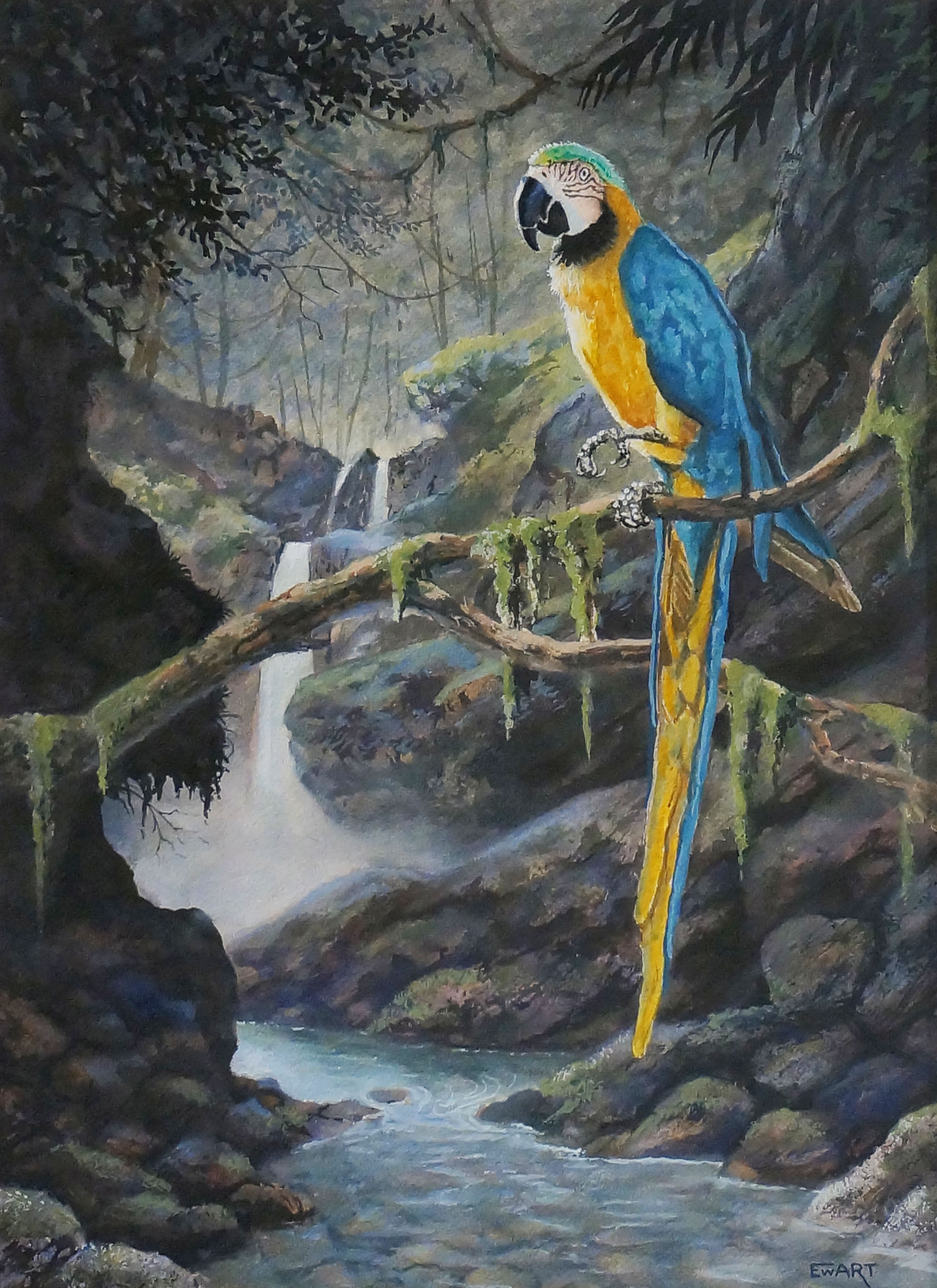 893-ewartbirdparadise