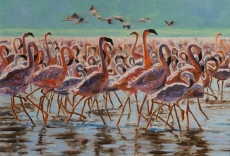 Flamingos-A-Bunch