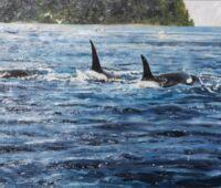 295-bessekillerwhales